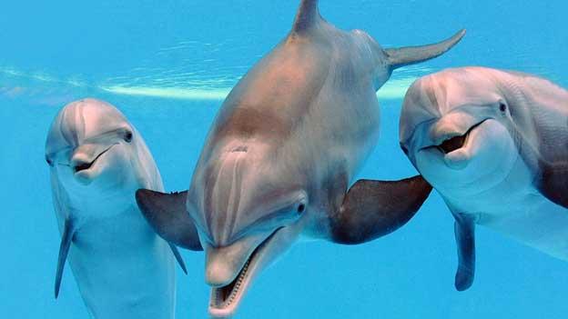 parto asistido por delfines