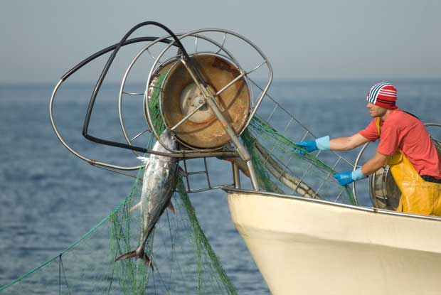 pesca ilegal de atún con redes de deriva