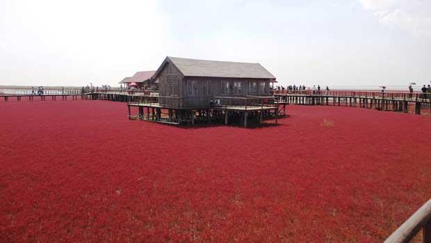 La Playa Roja de Panjin, China