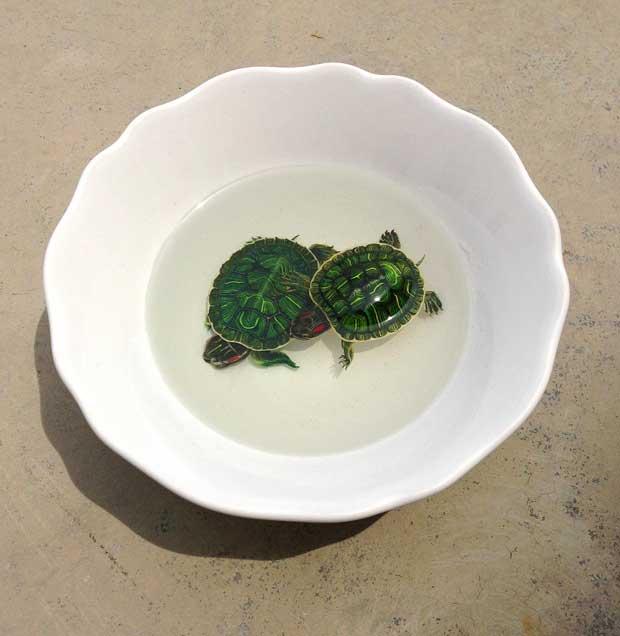 tortugas pintadas capa a capa en resina epoxi