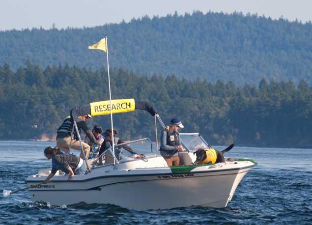 Tucker rastreando excrementos de orcas