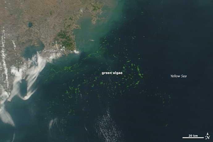 algas verdes en Qingdao, China, desde el espacio