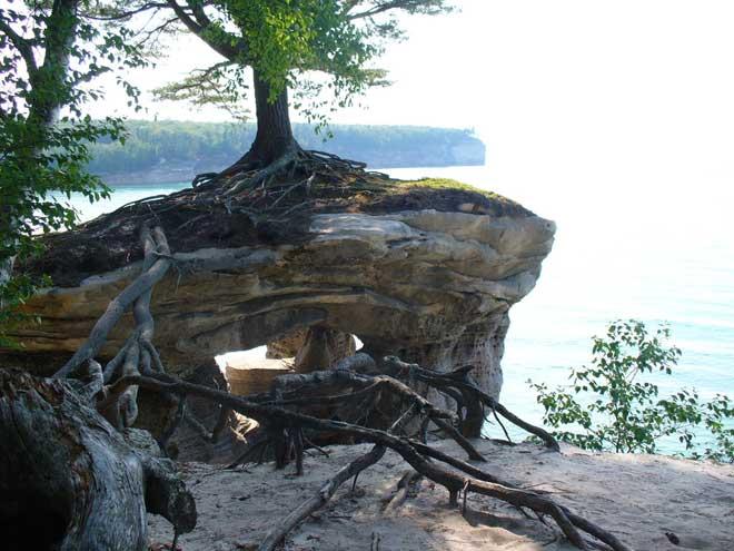 árbol de Chapel Rock, lago Michigan - raíces