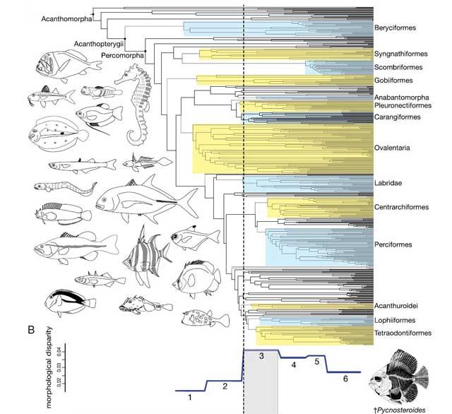árbol genealógico de los peces