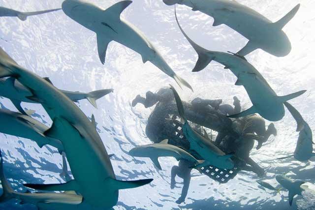 ataque de tiburones a los tripulantes del USS Indianapolis