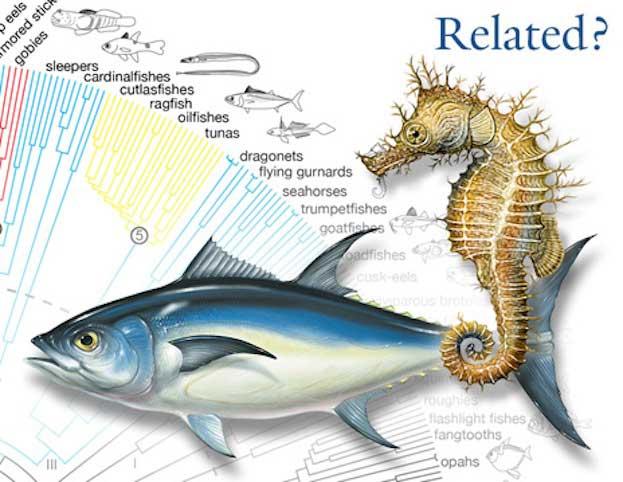 El atún y el caballito de mar son primos hermanos