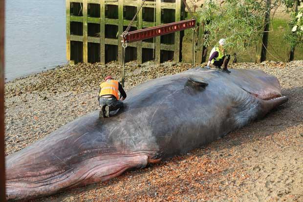 escultura de ballena varada en el Támesis, Londres