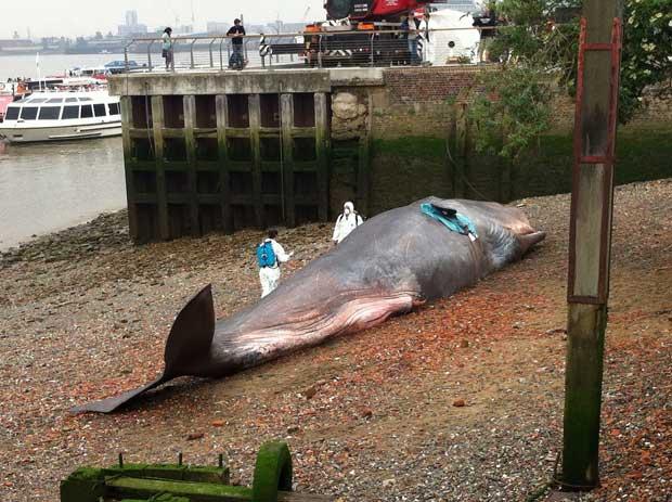 escultura de ballena varada en Greenwich