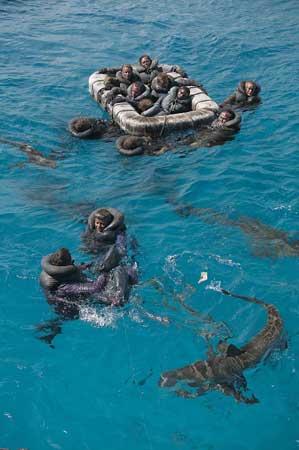 balsas salvavidas del Indianapolis atacadas por un tiburón