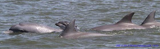bromance de delfines macho