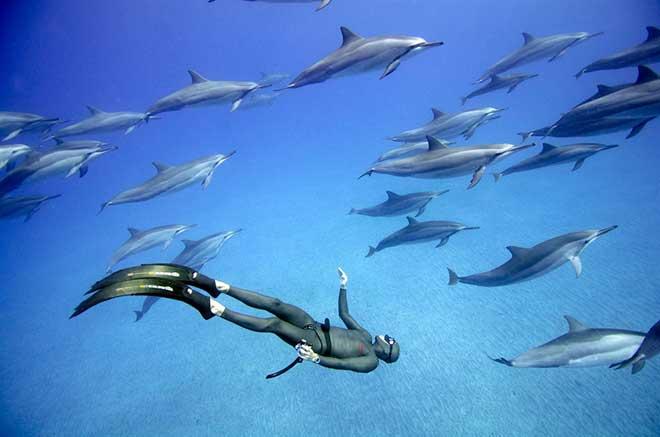 buceo libre con delfines