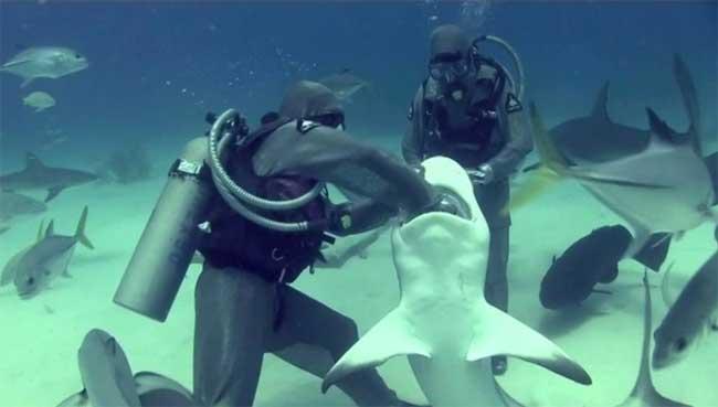 Cristina Zenato extrae anzuelo de la boca de un tiburón