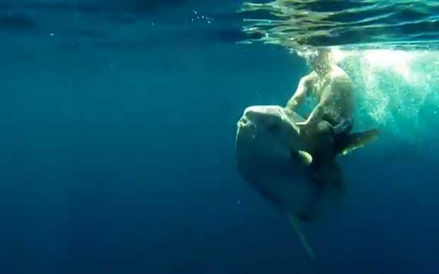 cabalgando un pez Mola mola