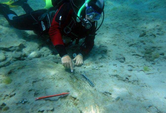 colmillo fosilizado de elefante en el lecho marino