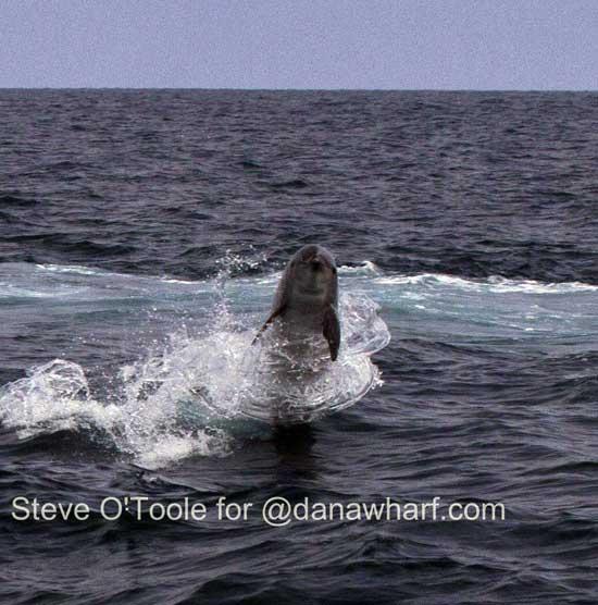 delfín baila el Hula Hoop