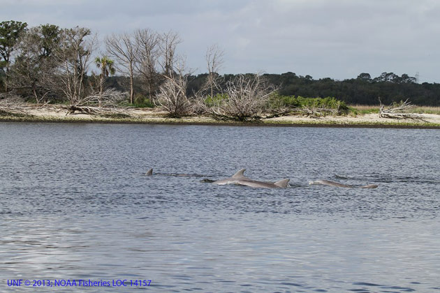los delfines machos se unen en 'bromances'