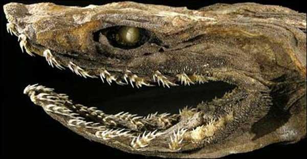 dientes de tiburón con volantes
