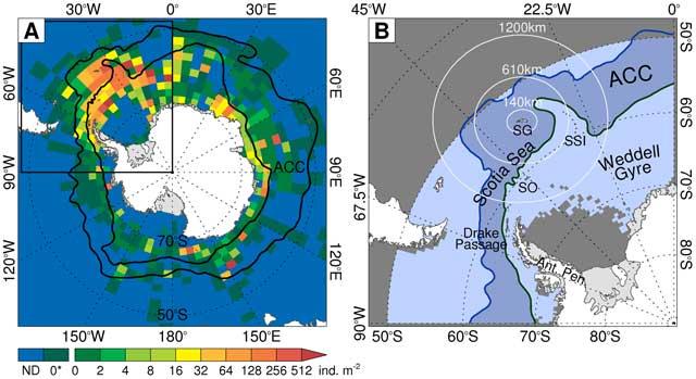 distribución del krill en el Mar de Weddell