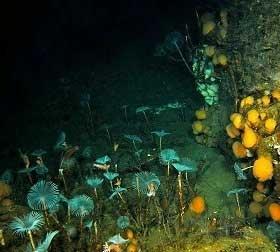 ecosistema submarino polar
