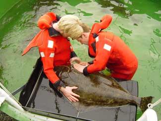enfermedades en peces de acuicultura