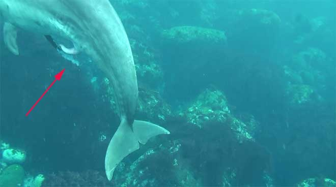 eyaculación espontánea de un delfín