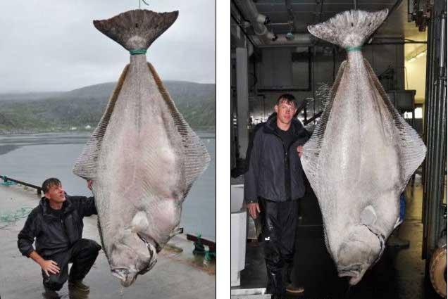 récord mundial de pesca de fletán