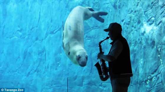 foca leopardo baila blues al sonido de un saxofón