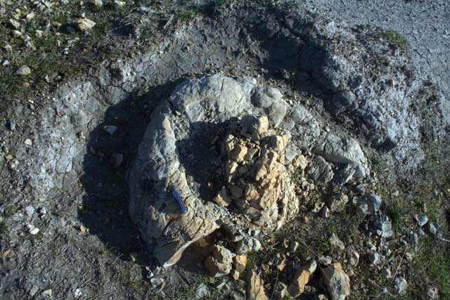 fósiles de ámbar gris encontrados en Umbria, Italia