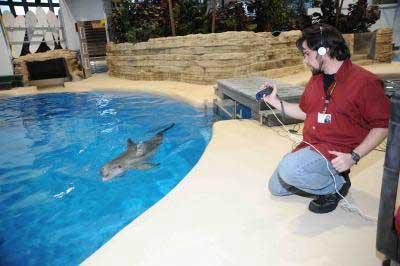 Jason Bruck pone una grabación a un delfín