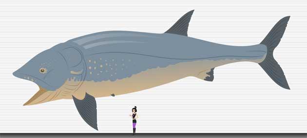 Leedsichthys, comparación de tamaño