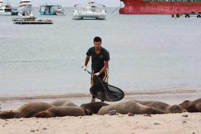 leones marinos en las Galápagos