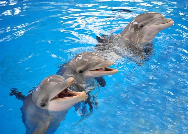 memoria de los delfines