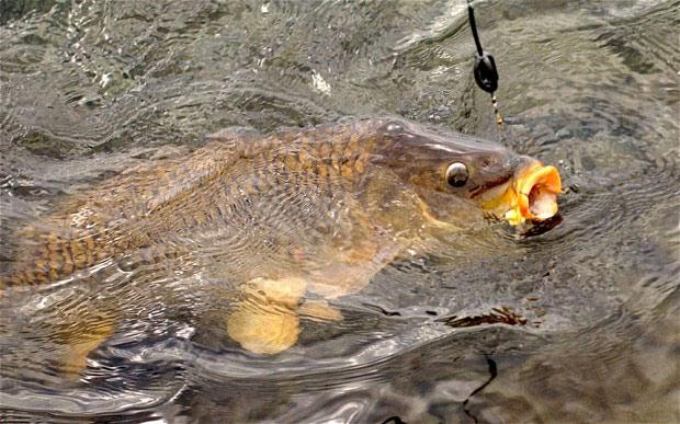¿Los peces sienten dolor?