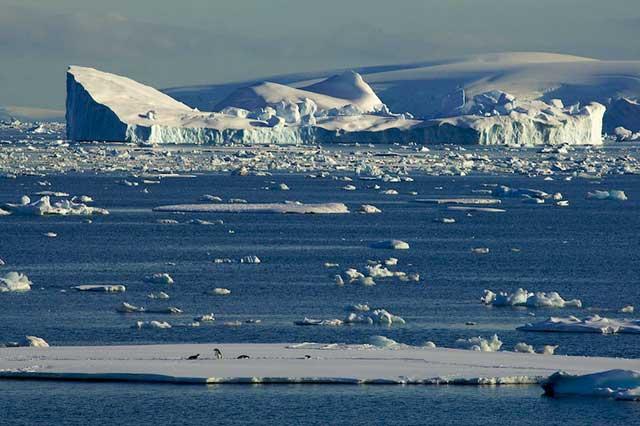 pingüinos sobre el hielo marino de la Antártida