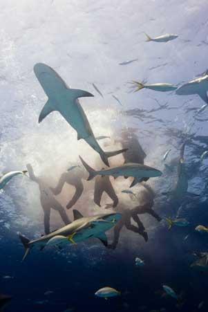 balsas salvavidas del Indianapolis atacadas por tiburones