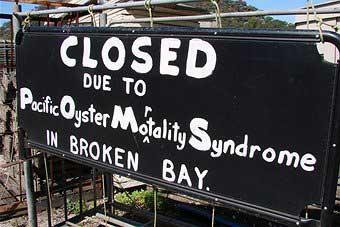 Granja de ostras cerrada por el POMS