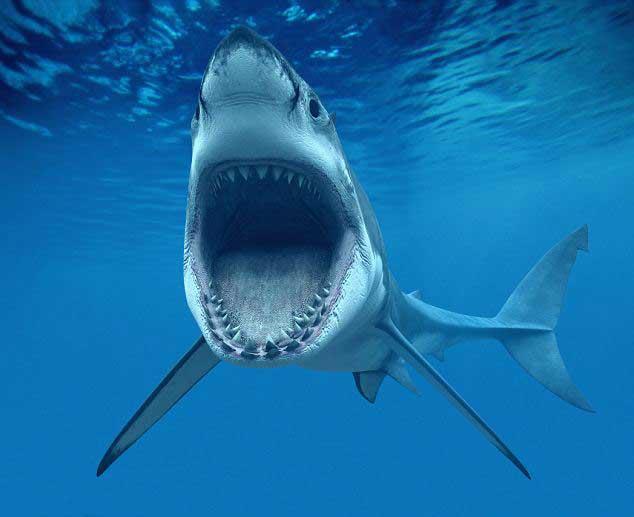 tiburón con gran boca abierta