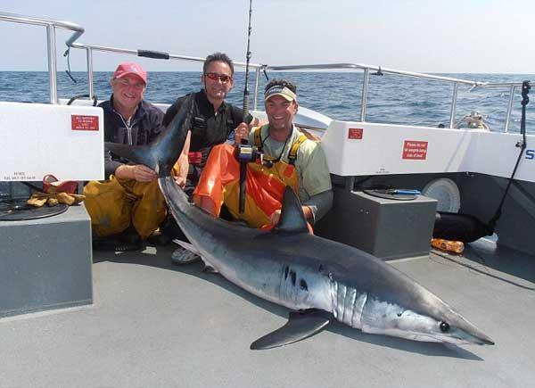 tiburón mako capturado en Gales