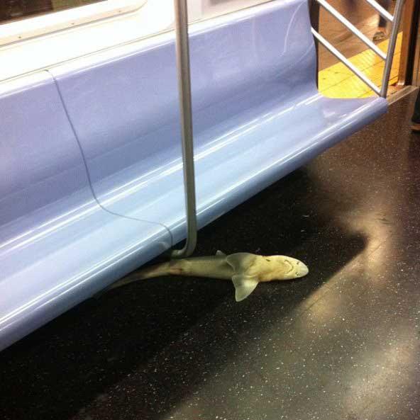 tiburón en el metro de Nueva York