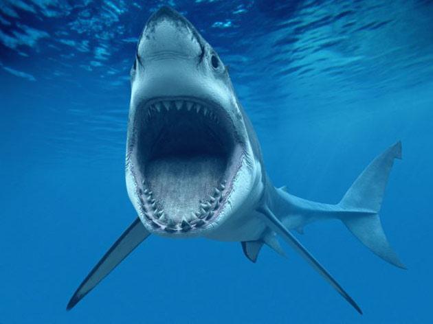 mordedura cinta transportadora del tiburón
