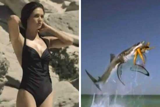 video Tampax de ataque de tiburón