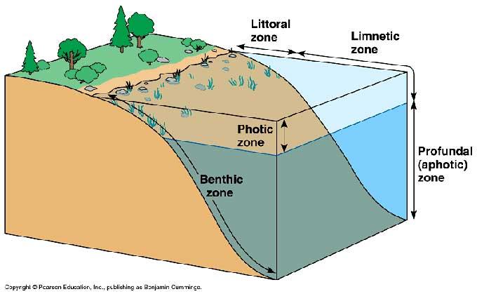 zona fótica marina