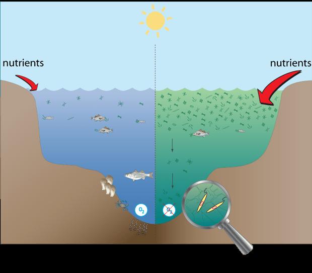 zonas muertas en los océanos, comparación