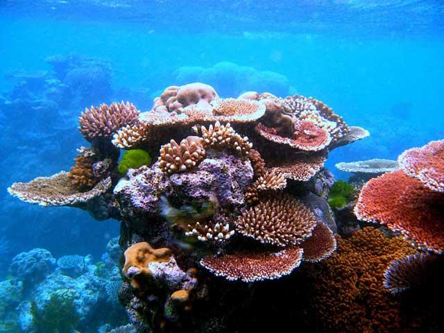 arrecife de coral, Mission Blue