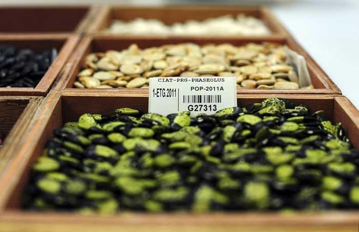 Bóveda Global de Semillas de Svalbard, semillas