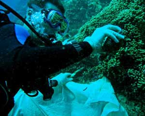 cavidad de arrecife de coral tapada con tela, muestras