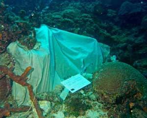 cavidad de arrecife de coral tapada con tela