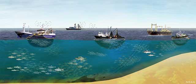 NOAA, pesqueros