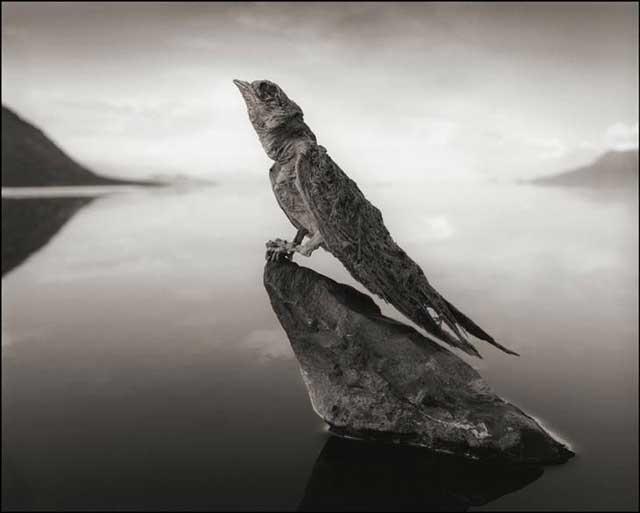 pájaro petrificado en el lago Natron