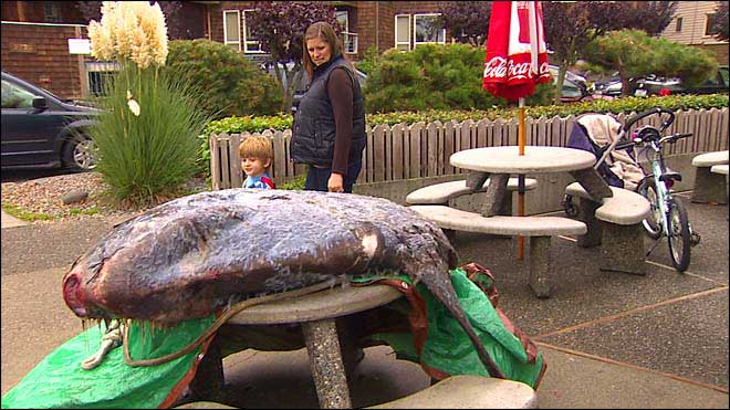 pez luna expuesto en un restaurante